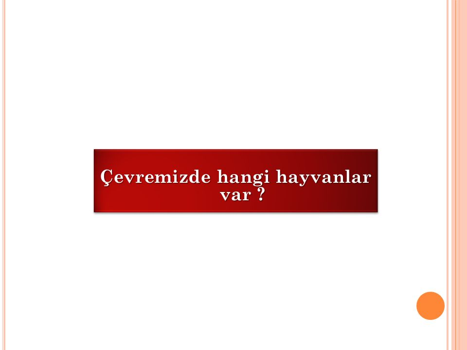 ETKİNLİK 1