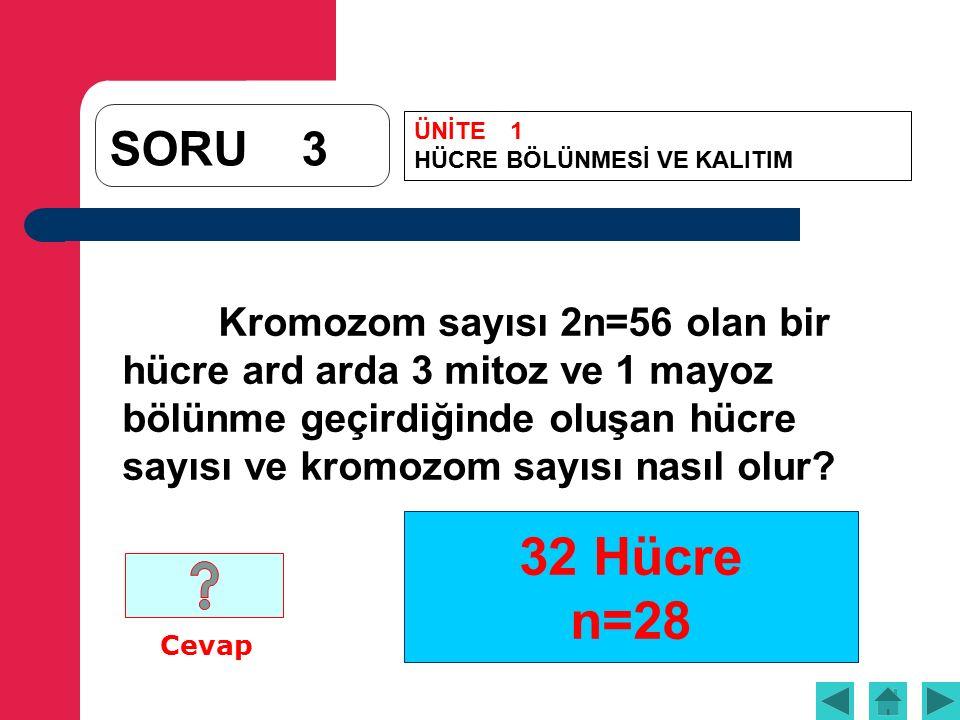 32 Hücre n=28 SORU3 Kromozom sayısı 2n=56 olan bir hücre ard arda 3 mitoz ve 1 mayoz bölünme geçirdiğinde oluşan hücre sayısı ve kromozom sayısı nasıl olur.