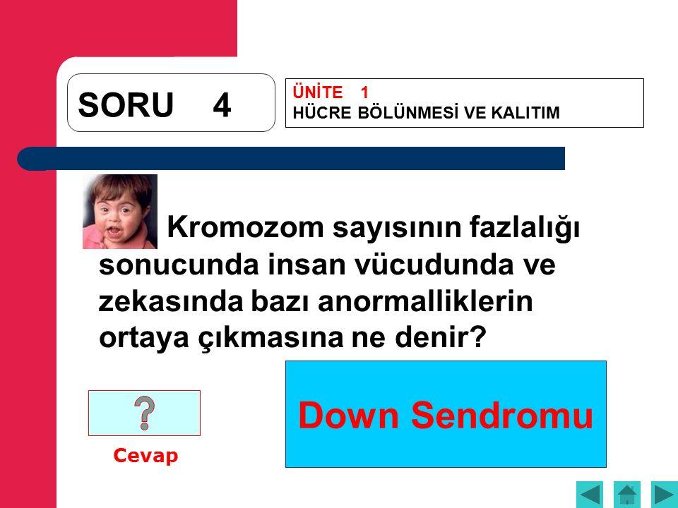Down Sendromu SORU4 Kromozom sayısının fazlalığı sonucunda insan vücudunda ve zekasında bazı anormalliklerin ortaya çıkmasına ne denir.