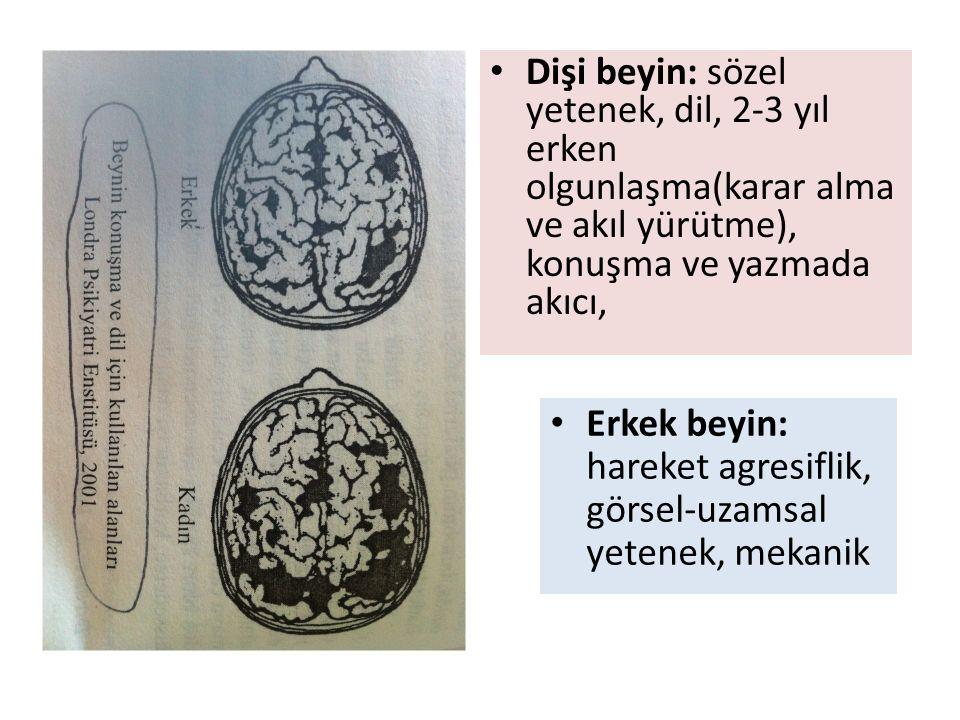 Dişi beyin: sözel yetenek, dil, 2-3 yıl erken olgunlaşma(karar alma ve akıl yürütme), konuşma ve yazmada akıcı, Erkek beyin: hareket agresiflik, görsel-uzamsal yetenek, mekanik