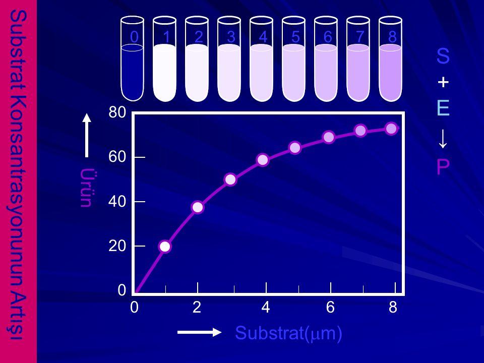 Substrat Konsantrasyonunun Artışı 213456780 0 2 4 6 8 Substrat(mm) Ürün 80 60 40 20 0 S+E↓PS+E↓P