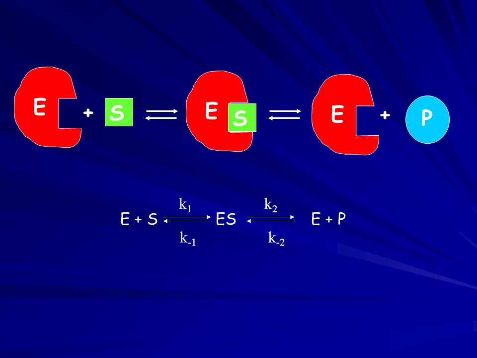 E + S ESE + P k1k1 k -1 k2k2 k -2 E S + E S E+ P