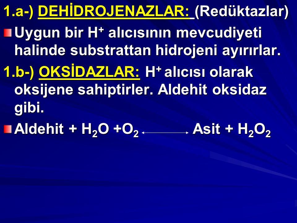 1.a-) DEHİDROJENAZLAR: (Redüktazlar) Uygun bir H + alıcısının mevcudiyeti halinde substrattan hidrojeni ayırırlar.