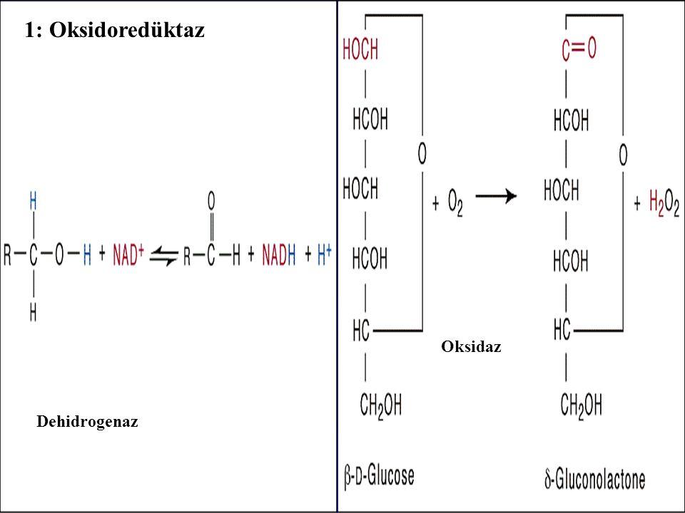 1: Oksidoredüktaz Dehidrogenaz - Oksidaz -