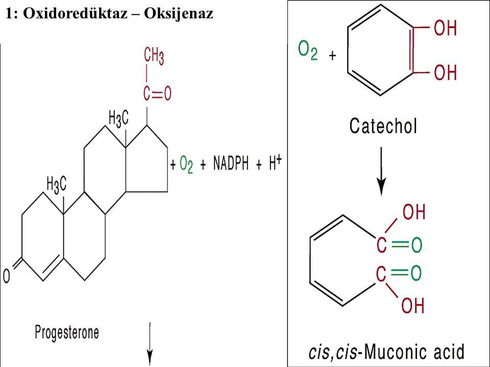 1: Oxidoredüktaz – Oksijenaz