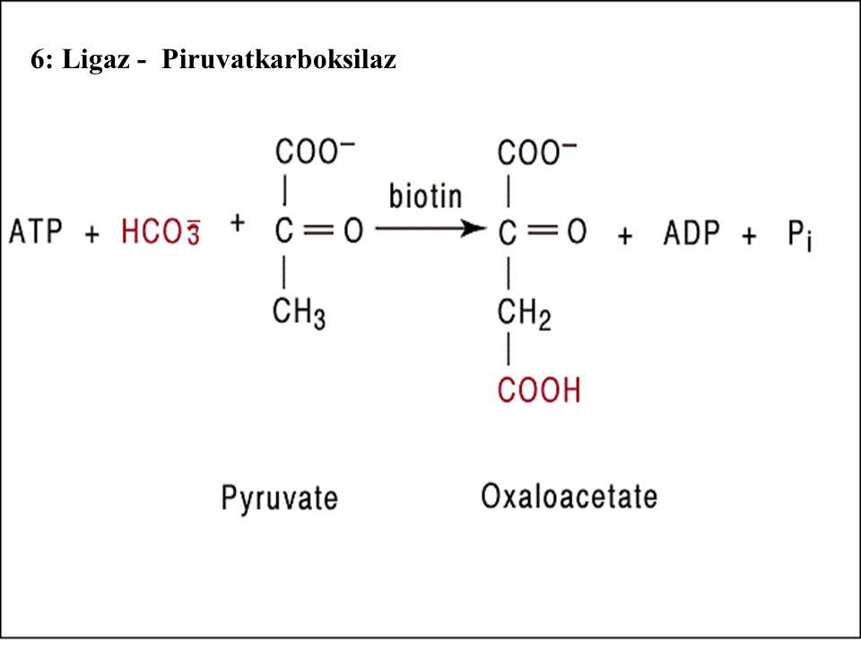 6: Ligaz - Piruvatkarboksilaz