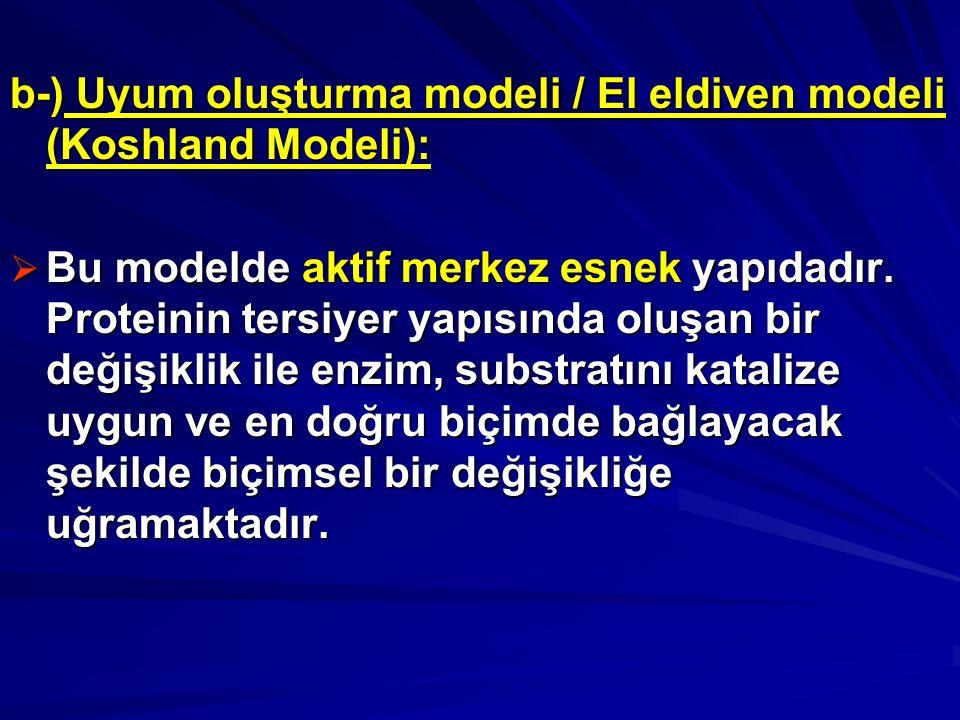 b-) Uyum oluşturma modeli / El eldiven modeli (Koshland Modeli):  Bu modelde aktif merkez esnek yapıdadır.