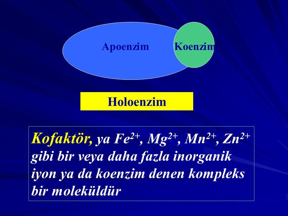 KoenzimApoenzim Holoenzim Kofaktör, ya Fe 2+, Mg 2+, Mn 2+, Zn 2+ gibi bir veya daha fazla inorganik iyon ya da koenzim denen kompleks bir moleküldür