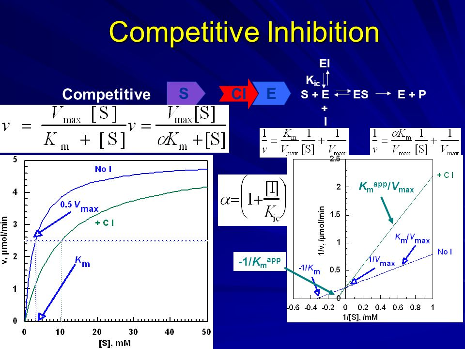 Competitive Inhibition Competitive SE CI S + EESE + P I + EI K ic K m app -1/K m app K m app /V max