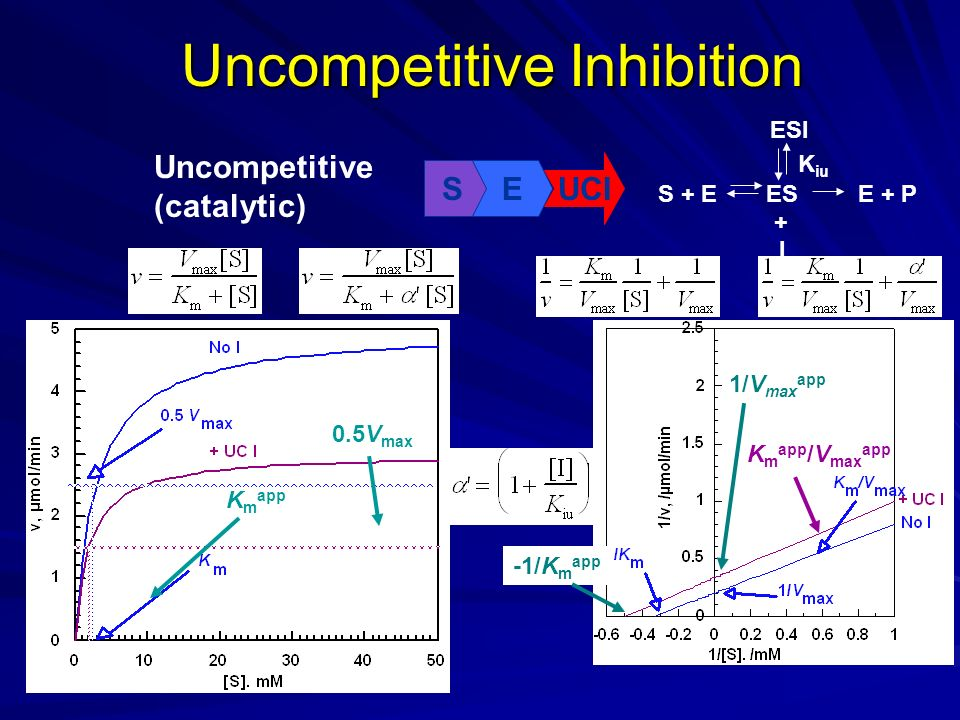 Uncompetitive Inhibition Uncompetitive (catalytic) SE UCI K iu S + EESE + P ESI I + K m app 0.5V max 1/V max app -1/K m app K m app /V max app