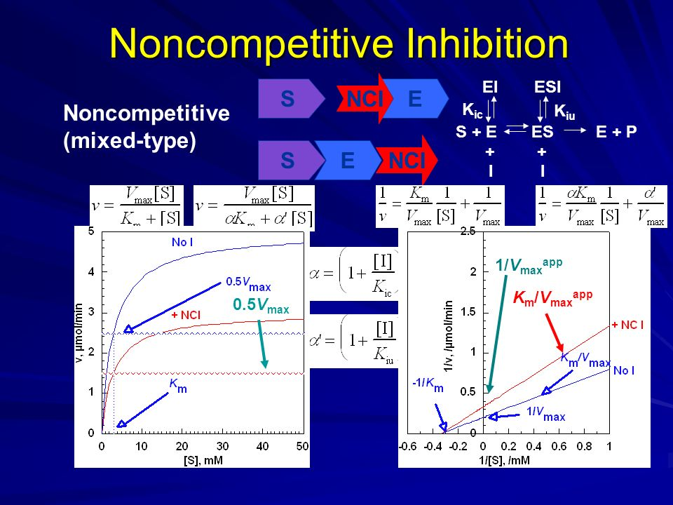 Noncompetitive Inhibition Noncompetitive (mixed-type) SE NCI + K ic K iu S + EESE + P I EIESI I + SE K m /V max app 1/V max app 0.5V max