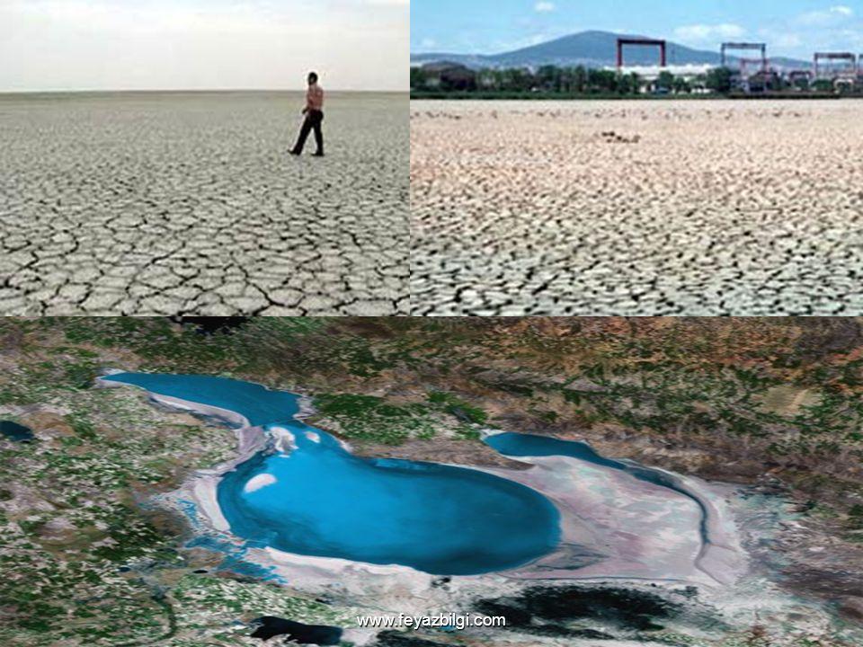 Kuraklık Fenerbahçe spor kulübünün kurulduğu yıllarda Çin'de meydana gelen kuraklıktan 24 milyon insan etkilenmiştir. 1965-1967 yılları arasında Hindi