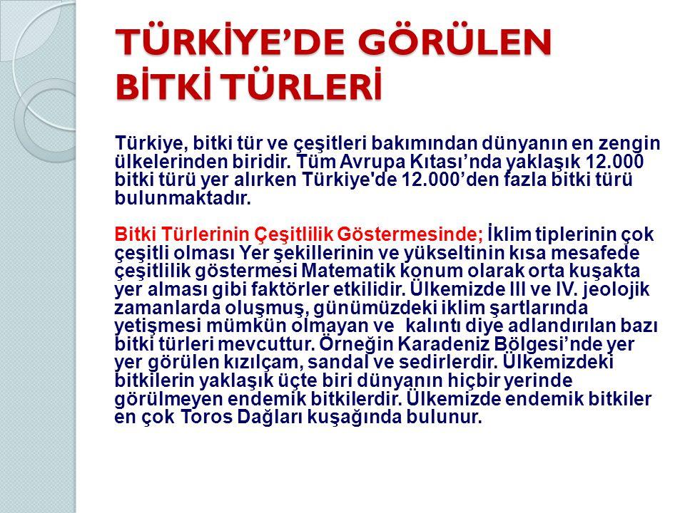 TÜRK İ YE'DE GÖRÜLEN B İ TK İ TÜRLER İ Türkiye, bitki tür ve çeşitleri bakımından dünyanın en zengin ülkelerinden biridir. Tüm Avrupa Kıtası'nda yakla