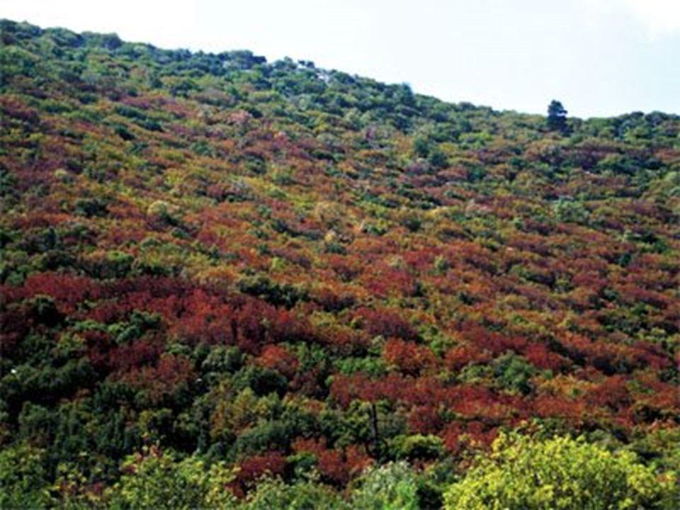 C.BOZKIR Kurak ve yarı kurak bölgelerde, ilkbahar yağışlarıyla yeşeren ve yaz kuraklığının etkisiyle sararan ot topluluklarıdır.