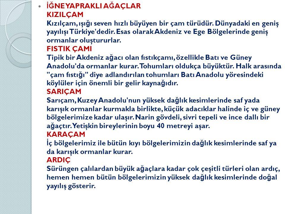 İĞ NE YAPRAKLI A Ğ AÇLAR KIZILÇAM Kızılçam, ışı ğ ı seven hızlı büyüyen bir çam türüdür. Dünyadaki en geniş yayılışı Türkiye'dedir. Esas olarak Akdeni