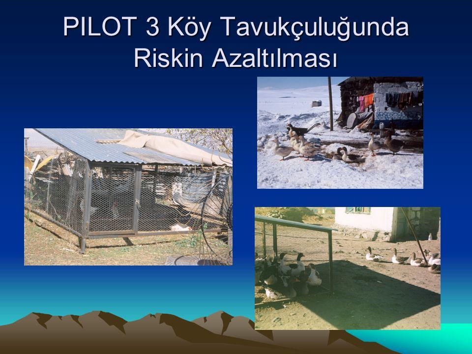 PILOT 3 Köy Tavukçuluğunda Riskin Azaltılması