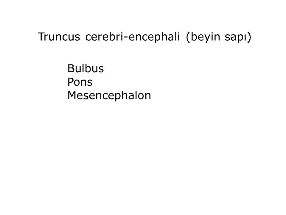 Medulla oblangata şekil ve yapı bakımından Medulla spinalis'e benzemekle birlikte, kendine özgü birçok özellik içerir.