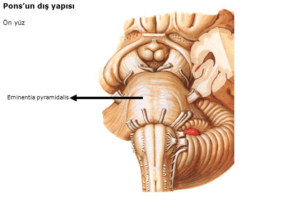 Sulcus arteriae basilaris Pons'un dış yapısı Ön yüz