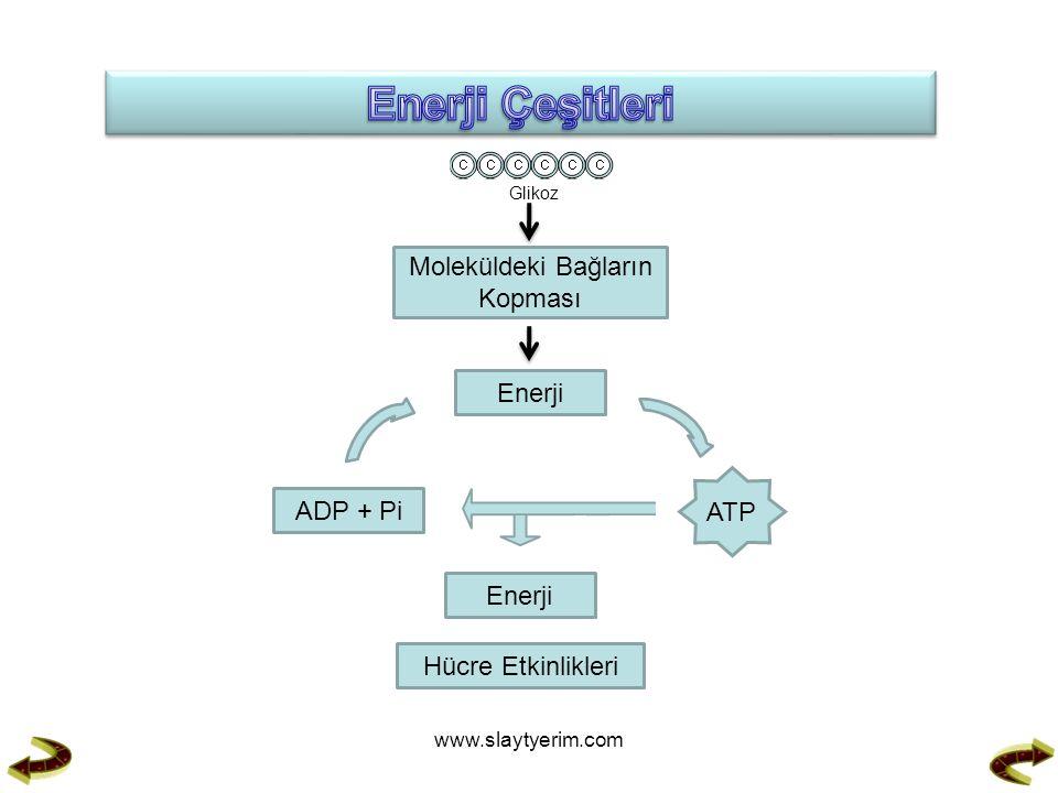 Glikoz Moleküldeki Bağların Kopması Enerji ATP ADP + Pi Enerji Hücre Etkinlikleri www.slaytyerim.com