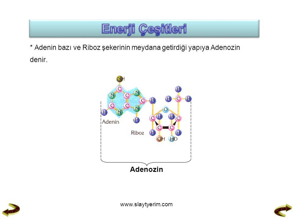 * Adenin bazı ve Riboz şekerinin meydana getirdiği yapıya Adenozin denir.