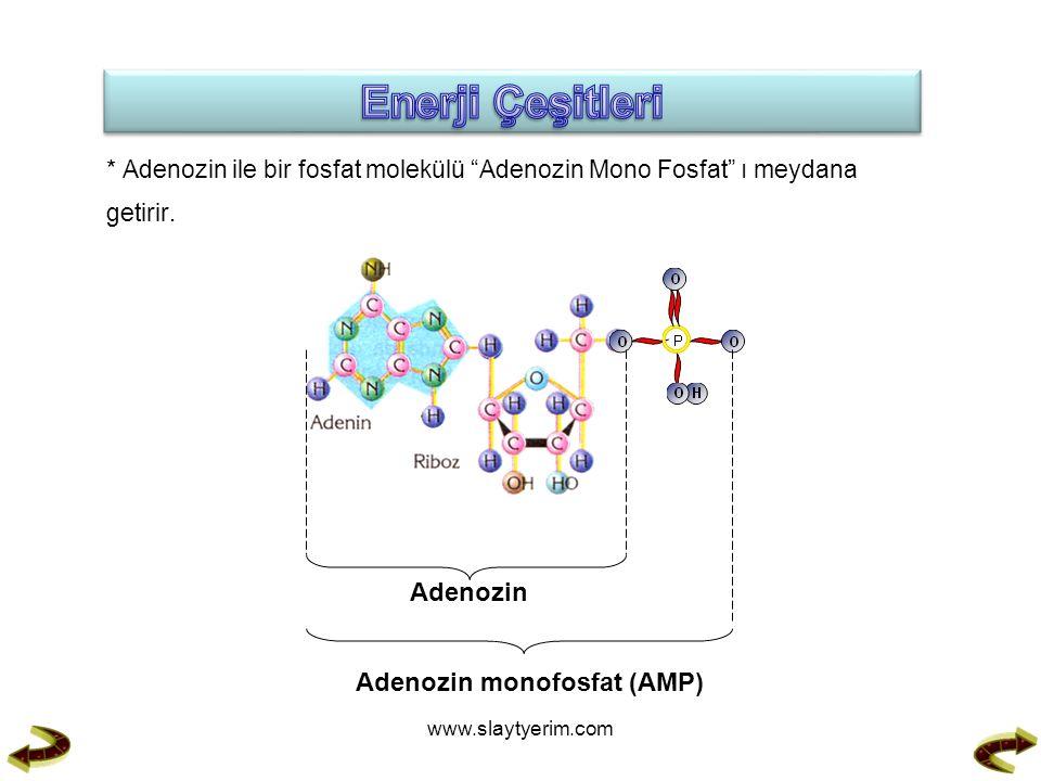 * Adenozin ile bir fosfat molekülü Adenozin Mono Fosfat ı meydana getirir.