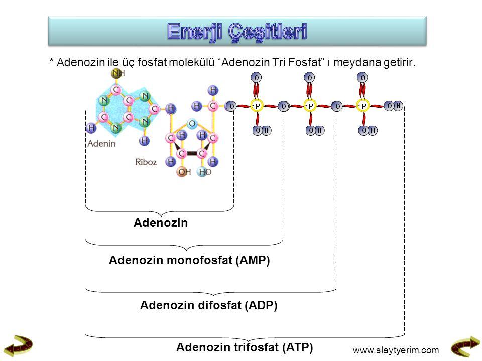 * Adenozin ile üç fosfat molekülü Adenozin Tri Fosfat ı meydana getirir.