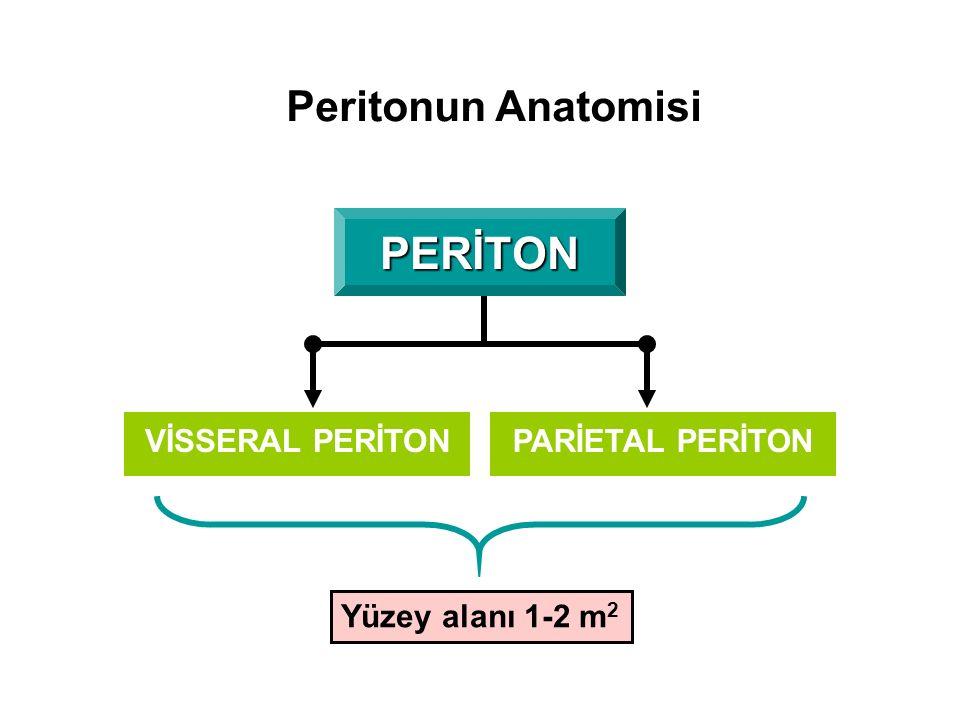 Peritonun Anatomisi PERİTON PARİETAL PERİTONVİSSERAL PERİTON Yüzey alanı 1-2 m 2