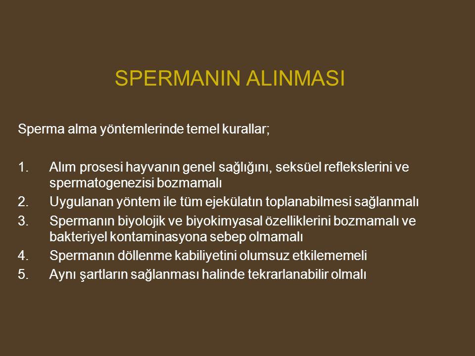 SPERMANIN ALINMASI Sperma alma yöntemlerinde temel kurallar; 1.Alım prosesi hayvanın genel sağlığını, seksüel reflekslerini ve spermatogenezisi bozmam