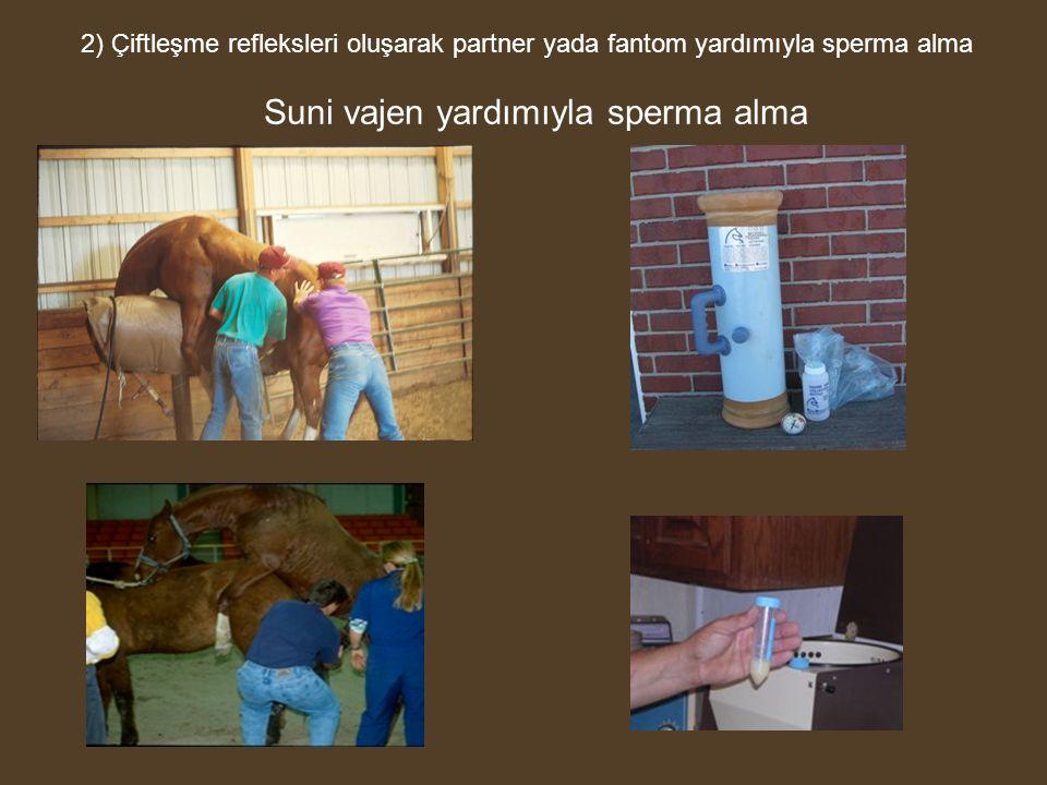 2) Çiftleşme refleksleri oluşarak partner yada fantom yardımıyla sperma alma Suni vajen yardımıyla sperma alma