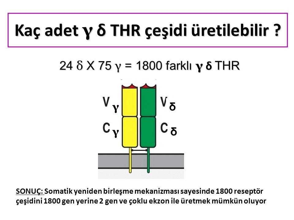 24 δ X 75 γ = 1800 farklı γ δ THR δ γ γ δ Kaç adet γ δ THR çeşidi üretilebilir .