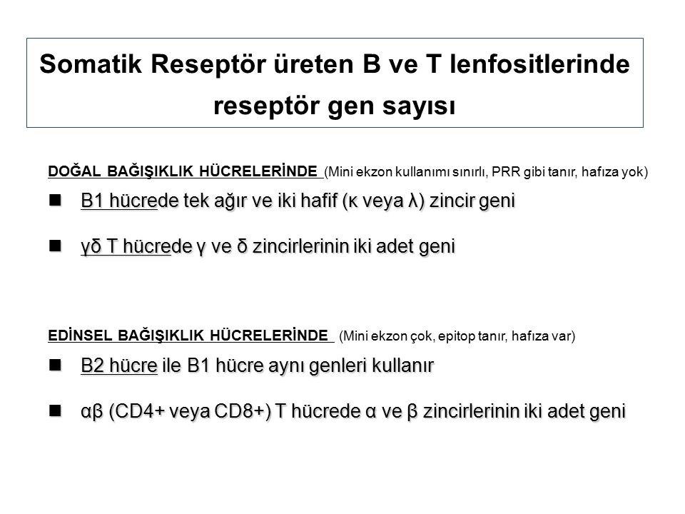  B1 hücrede tek ağır ve iki hafif (κ veya λ) zincir geni  γδ T hücrede γ ve δ zincirlerinin iki adet geni  B2 hücre ile B1 hücre aynı genleri kullanır  αβ (CD4+ veya CD8+) T hücrede α ve β zincirlerinin iki adet geni DOĞAL BAĞIŞIKLIK HÜCRELERİNDE (Mini ekzon kullanımı sınırlı, PRR gibi tanır, hafıza yok)  B1 hücrede tek ağır ve iki hafif (κ veya λ) zincir geni  γδ T hücrede γ ve δ zincirlerinin iki adet geni EDİNSEL BAĞIŞIKLIK HÜCRELERİNDE (Mini ekzon çok, epitop tanır, hafıza var)  B2 hücre ile B1 hücre aynı genleri kullanır  αβ (CD4+ veya CD8+) T hücrede α ve β zincirlerinin iki adet geni Somatik Reseptör üreten B ve T lenfositlerinde reseptör gen sayısı