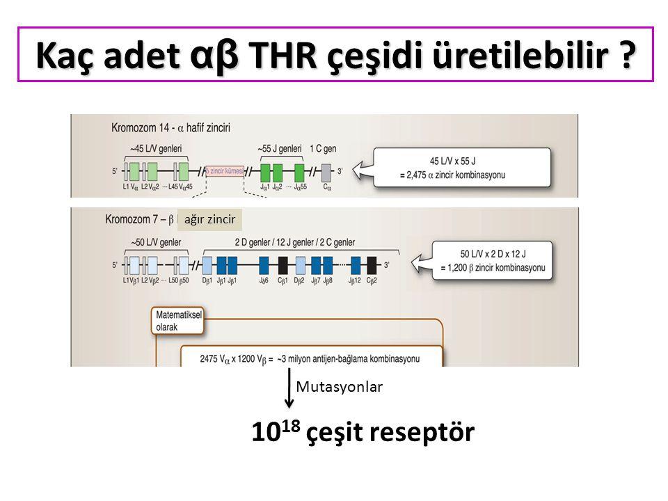 Kaç adet αβ THR çeşidi üretilebilir ? Mutasyonlar 10 18 çeşit reseptör ağır zincir