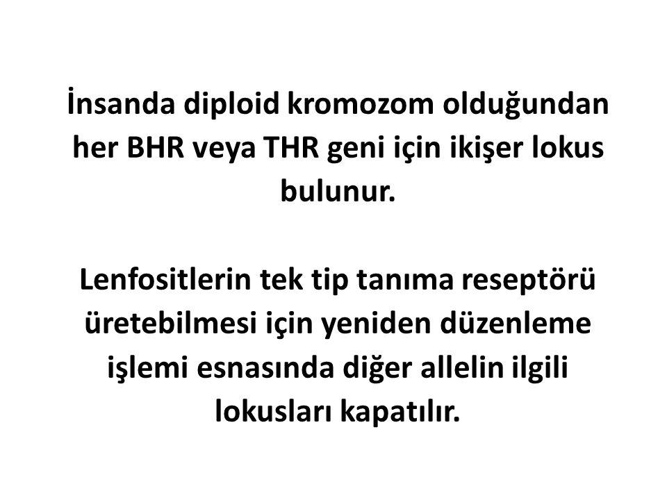 İnsanda diploid kromozom olduğundan her BHR veya THR geni için ikişer lokus bulunur.