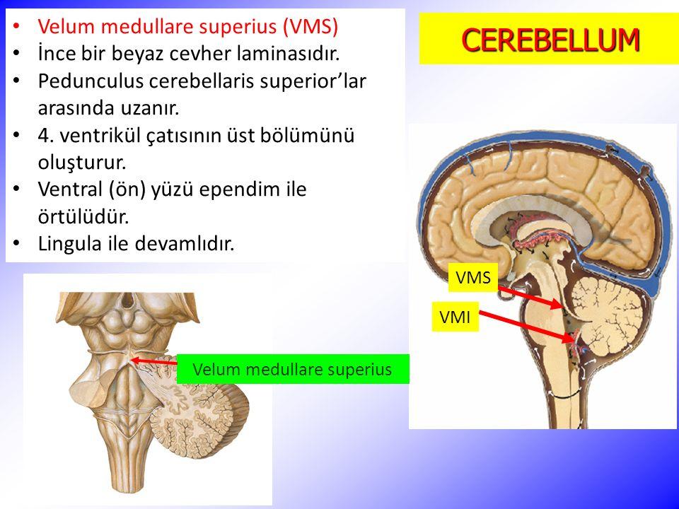 CEREBELLUM Velum medullare superius (VMS) İnce bir beyaz cevher laminasıdır. Pedunculus cerebellaris superior'lar arasında uzanır. 4. ventrikül çatısı