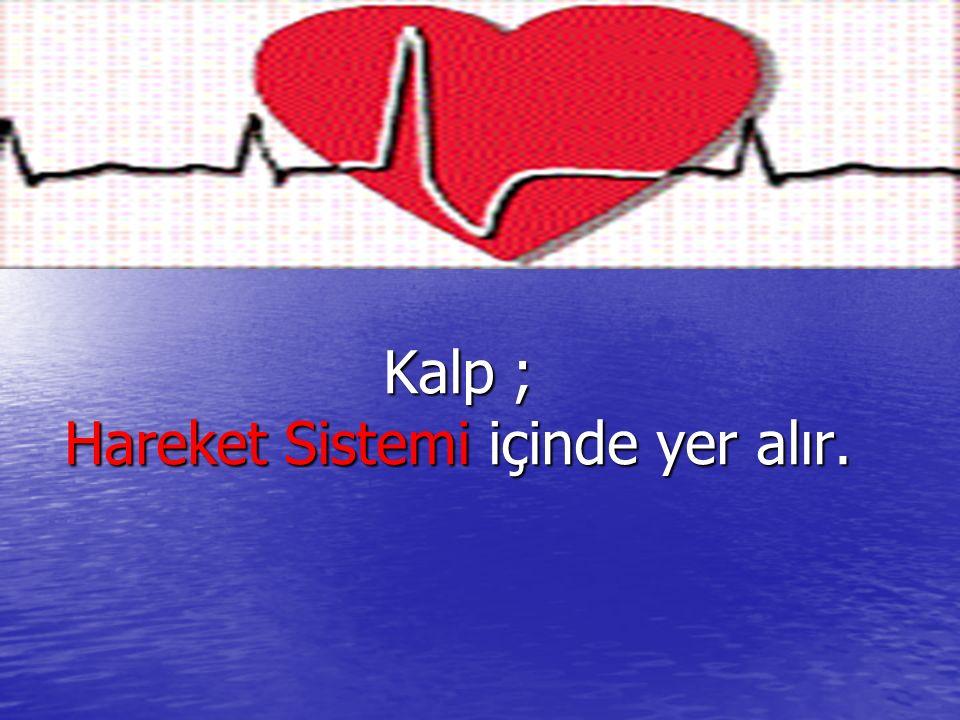 Kalp ; Hareket Sistemi içinde yer alır.