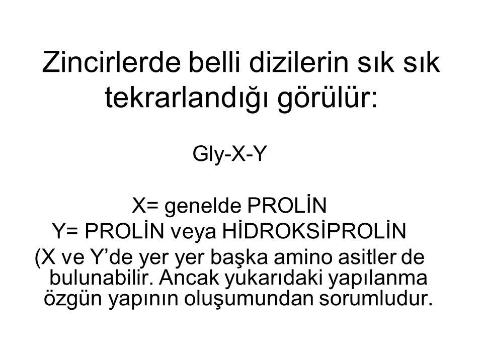 Zincirlerde belli dizilerin sık sık tekrarlandığı görülür: Gly-X-Y X= genelde PROLİN Y= PROLİN veya HİDROKSİPROLİN (X ve Y'de yer yer başka amino asit