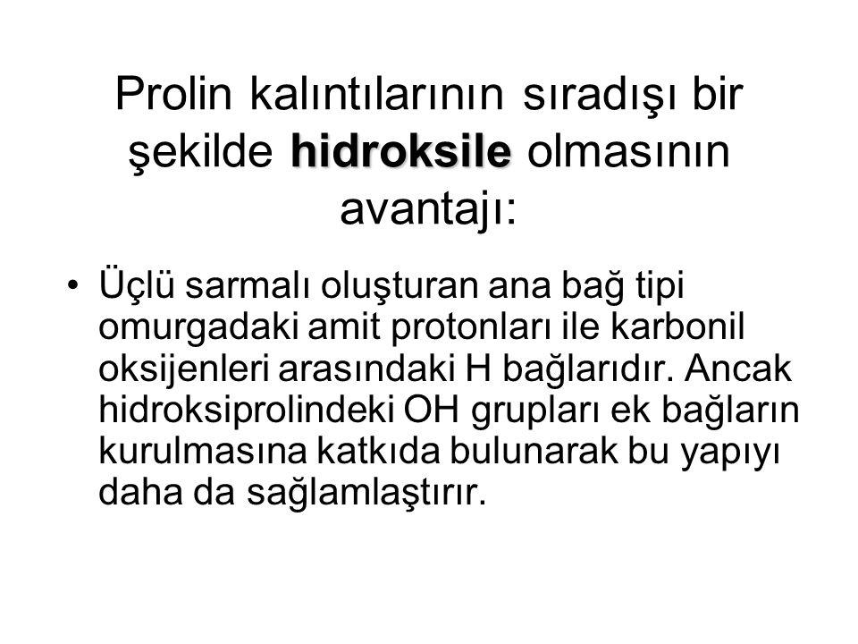hidroksile Prolin kalıntılarının sıradışı bir şekilde hidroksile olmasının avantajı: Üçlü sarmalı oluşturan ana bağ tipi omurgadaki amit protonları il