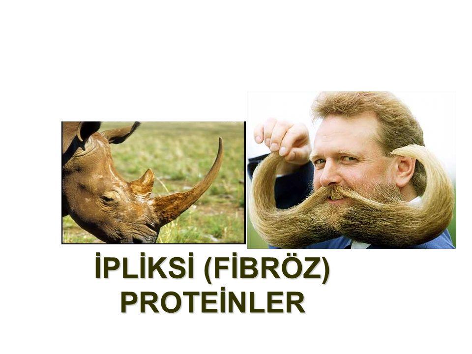 İPLİKSİ (FİBRÖZ) PROTEİNLER