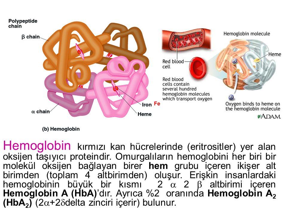 Hemoglobin kırmızı kan hücrelerinde (eritrositler) yer alan oksijen taşıyıcı proteindir. Omurgalıların hemoglobini her biri bir molekül oksijen bağlay