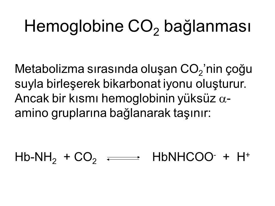 Hemoglobine CO 2 bağlanması Metabolizma sırasında oluşan CO 2 'nin çoğu suyla birleşerek bikarbonat iyonu oluşturur. Ancak bir kısmı hemoglobinin yüks