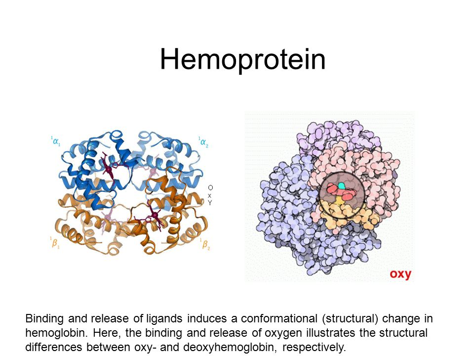 Nükleoprotein kompleksleri Structure of the Oxytricha nova telomere end binding protein complexed with single strand DNA.