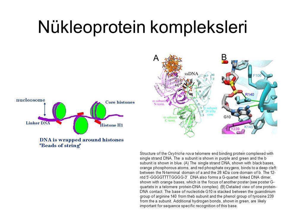 Glikoprotein Hücre zarındaki glikoproteinler