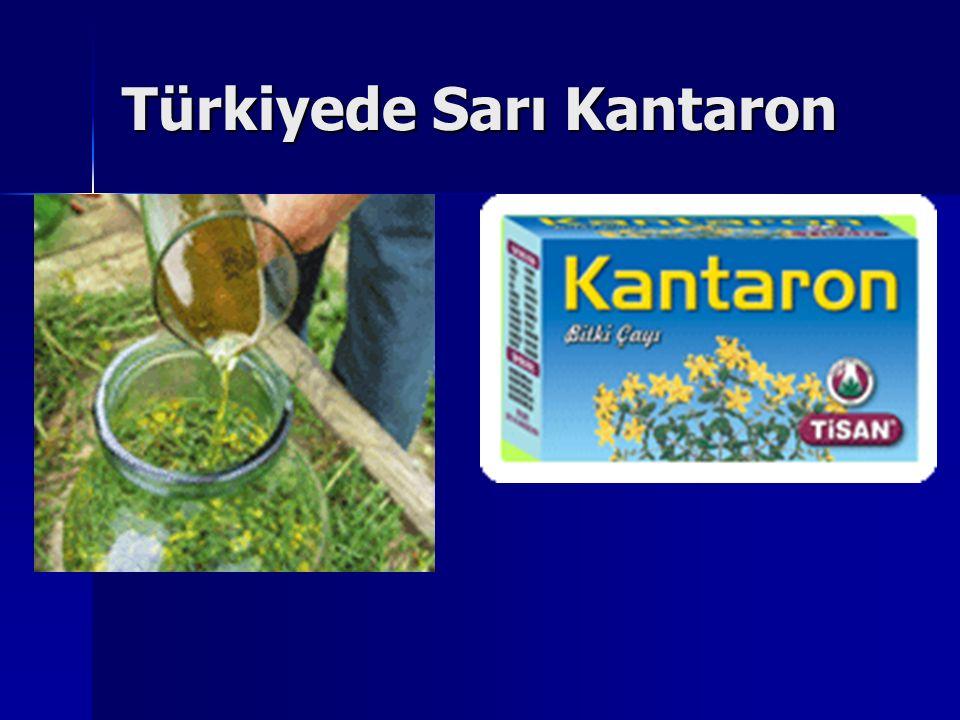 Türkiyede Sarı Kantaron