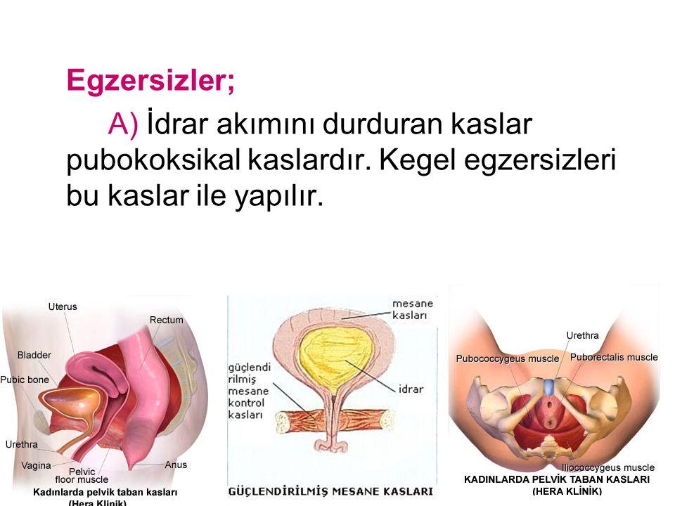 Egzersizler; A) İdrar akımını durduran kaslar pubokoksikal kaslardır. Kegel egzersizleri bu kaslar ile yapılır.
