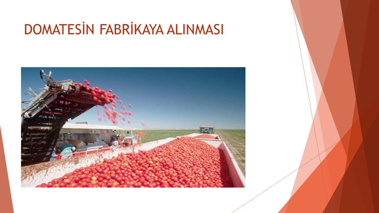 DOMATESLERİN YIKANMASI Akış kanalında ıslatılmış ve hatta bir ölçüde ön yıkama yapılmış domatesler, ayıklanmadan önce itina ile iyice yıkanırlar.