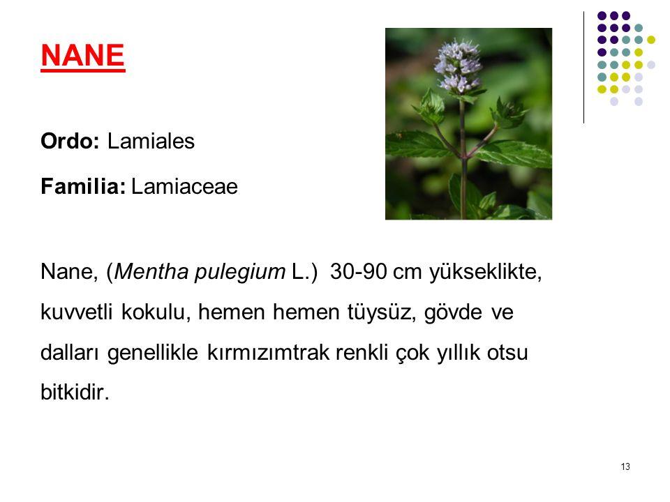 13 NANE Ordo: Lamiales Familia: Lamiaceae Nane, (Mentha pulegium L.) 30-90 cm yükseklikte, kuvvetli kokulu, hemen hemen tüysüz, gövde ve dalları genellikle kırmızımtrak renkli çok yıllık otsu bitkidir.