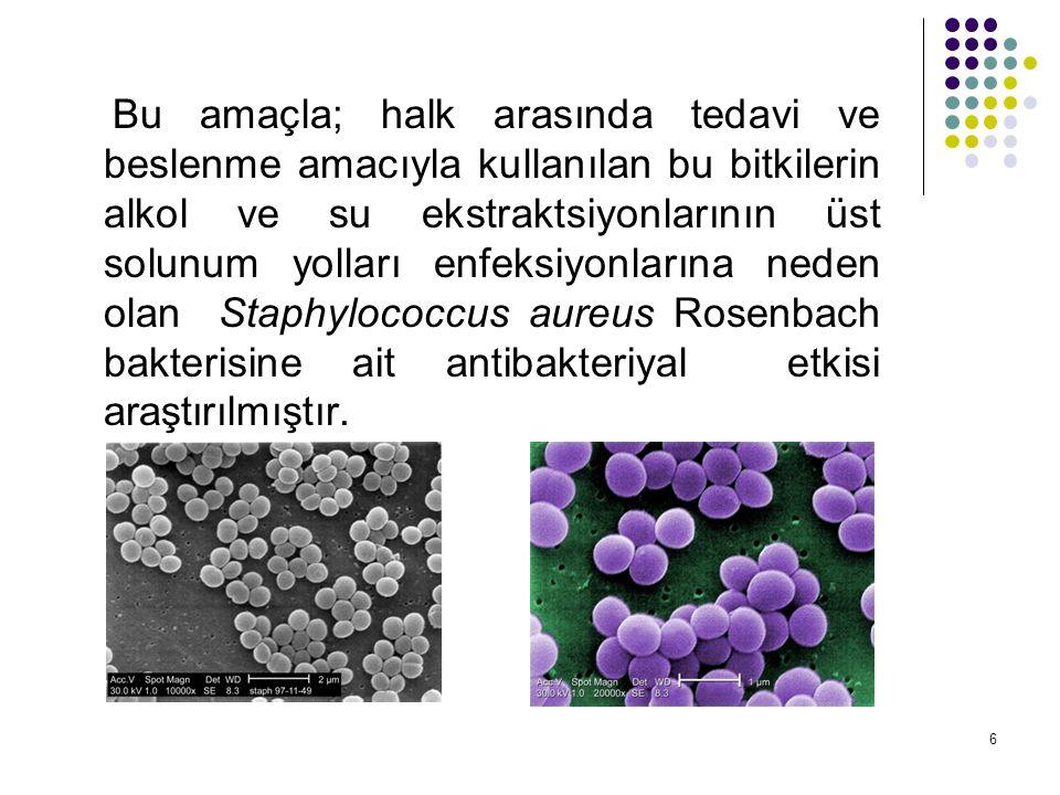 6 Bu amaçla; halk arasında tedavi ve beslenme amacıyla kullanılan bu bitkilerin alkol ve su ekstraktsiyonlarının üst solunum yolları enfeksiyonlarına neden olan Staphylococcus aureus Rosenbach bakterisine ait antibakteriyal etkisi araştırılmıştır.