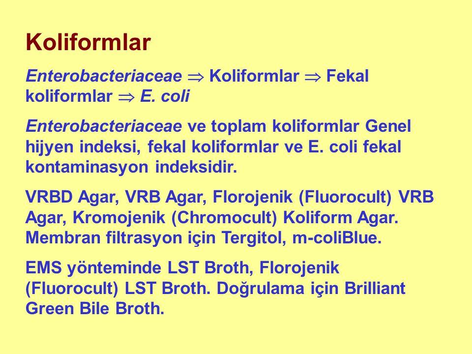 Koliformlar Enterobacteriaceae  Koliformlar  Fekal koliformlar  E.