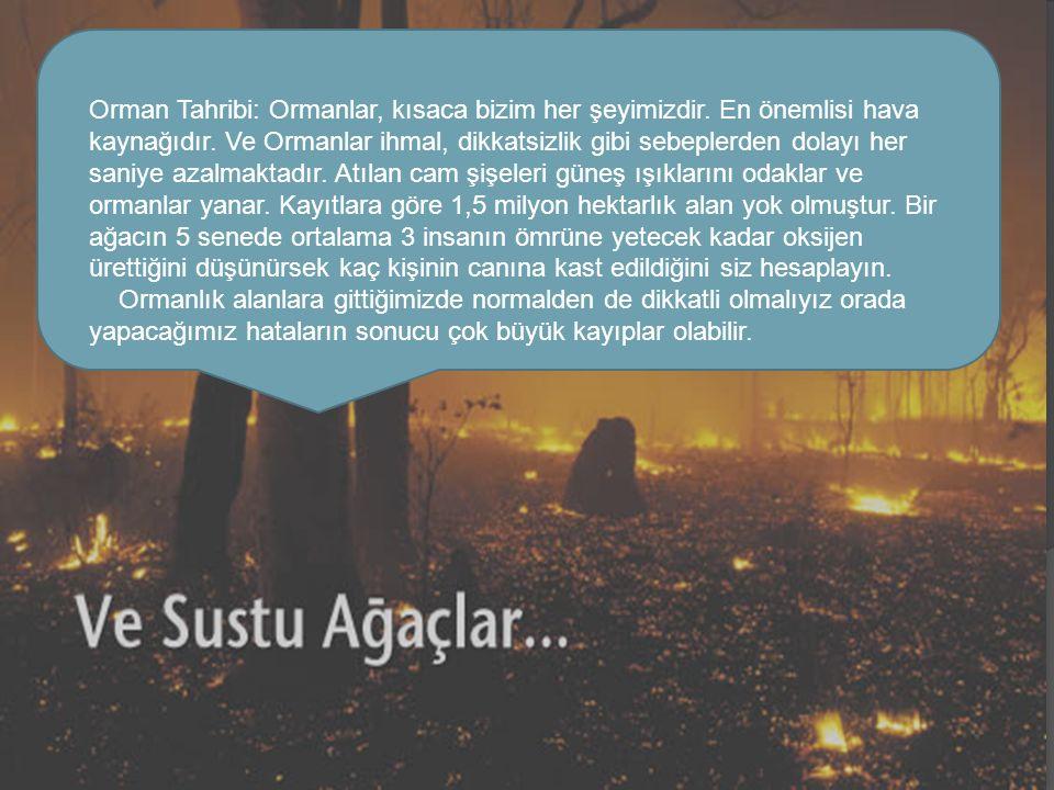 Orman Tahribi: Ormanlar, kısaca bizim her şeyimizdir.