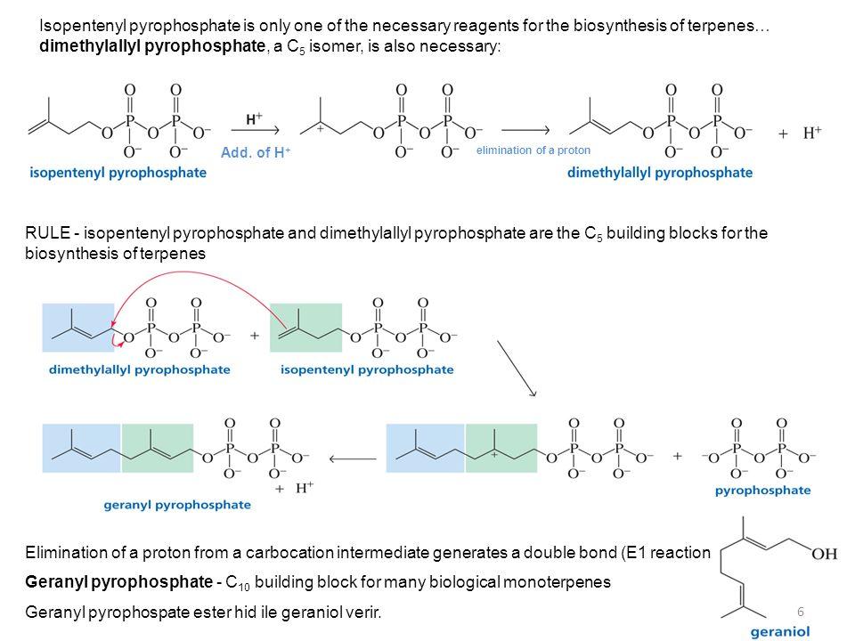 Hemiterpenes consist of a single isoprene unit.